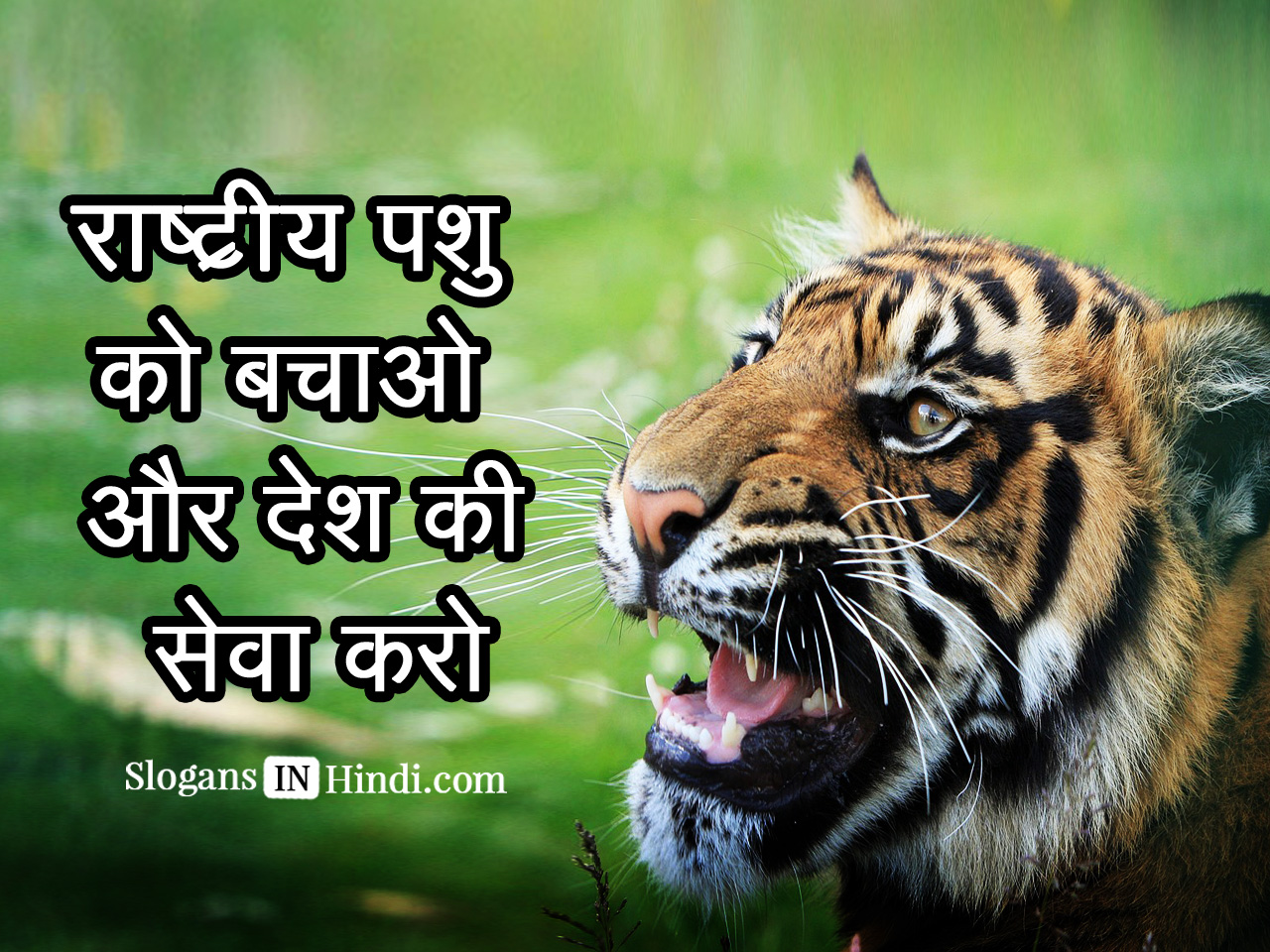 save the tigers in hindi Save tigers quotes and slogan (advantages disadvantages ) tiger conservation tigers are unique exotic animals that are beloved by many around the world but as intriguing as they are, these animals are endangered and have been threatened by nature and man alike over the years.