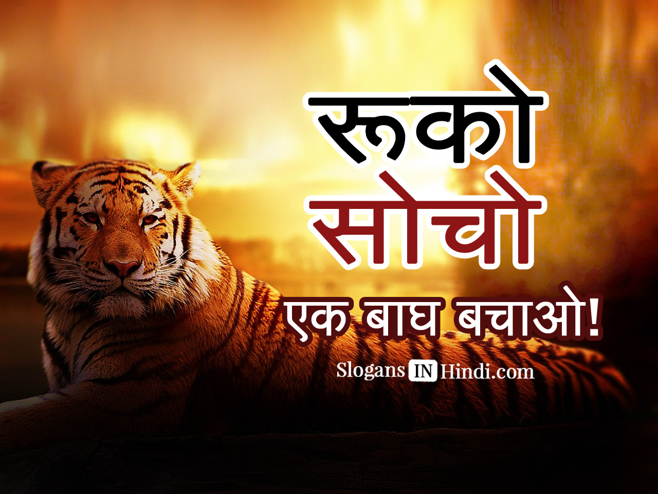 Best Bollywood Movies for Animal Lovers